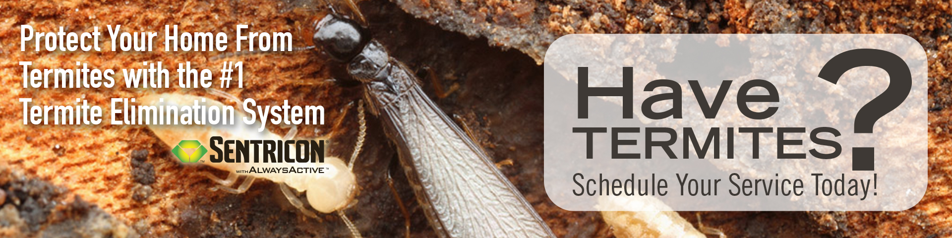 Termite Protection and Elimination-Barnetts Termite and Pest Control